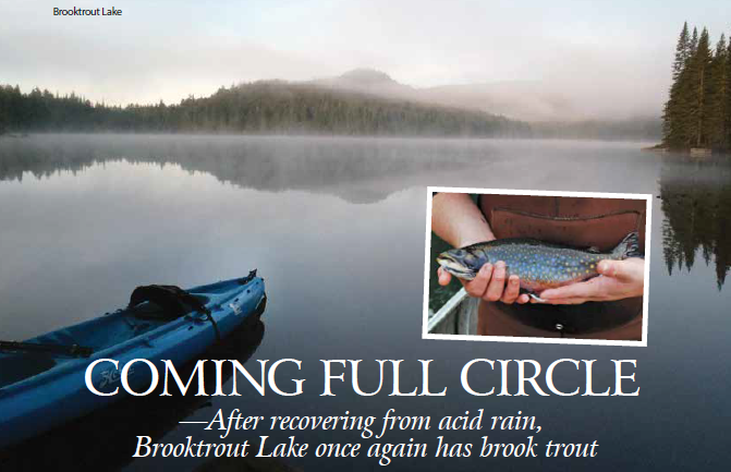 Picture showing an Adirondack lake and the brook trout that are back